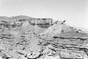 1955 View of Four Aces tunnel from about half a mile. Note the mine tailings from 1893 below. The light colored rock is Shinarump conglomerate, dark rock below is Moenkopi sandstone, sloping stuff piled on top is Chinle shale.